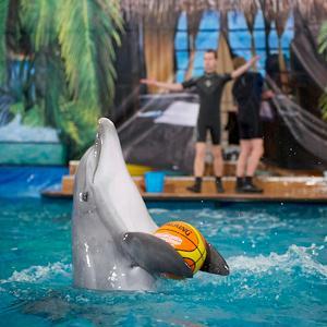 Дельфинарии, океанариумы Заветного