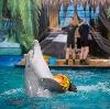 Дельфинарии, океанариумы в Заветном